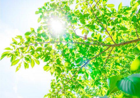イメージ写真_夏の日差し